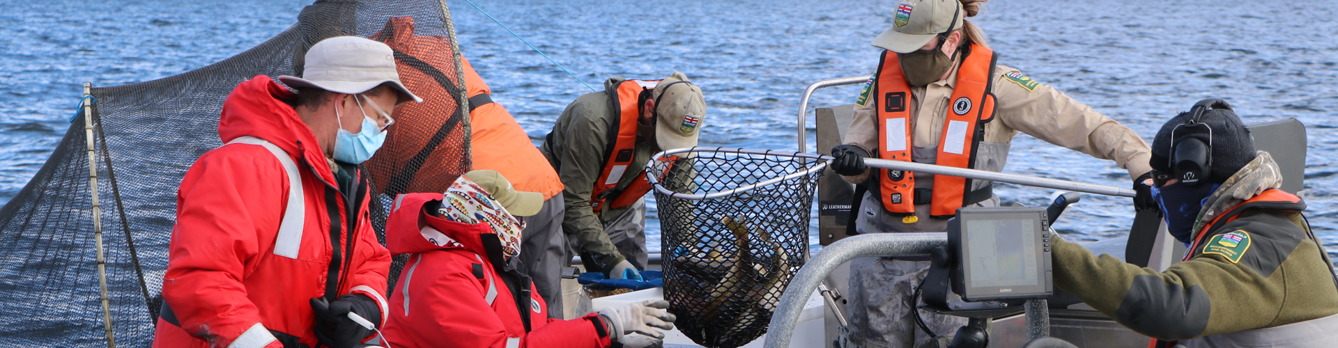 Walleye Stocking Program: Collecting wild eggs and milt to create put-grow-take fisheries.